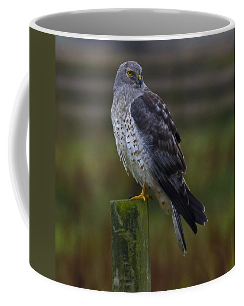 Northern Harrier Coffee Mug featuring the photograph Northern Harrier by Rob Mclean