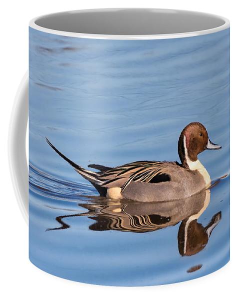 Northern Coffee Mug featuring the photograph Northern Pintail Drake by Kathleen Bishop
