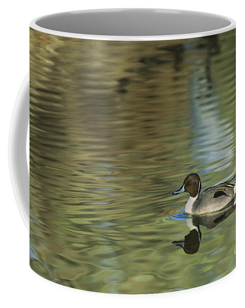 North America Coffee Mug featuring the photograph Northern Pintail In A Quiet Pond California Wildlife by Dave Welling
