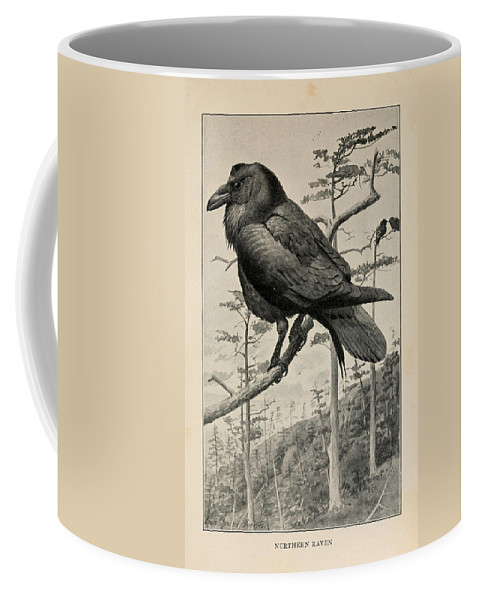 Fuertes Coffee Mug featuring the drawing Northern Raven by Philip Ralley