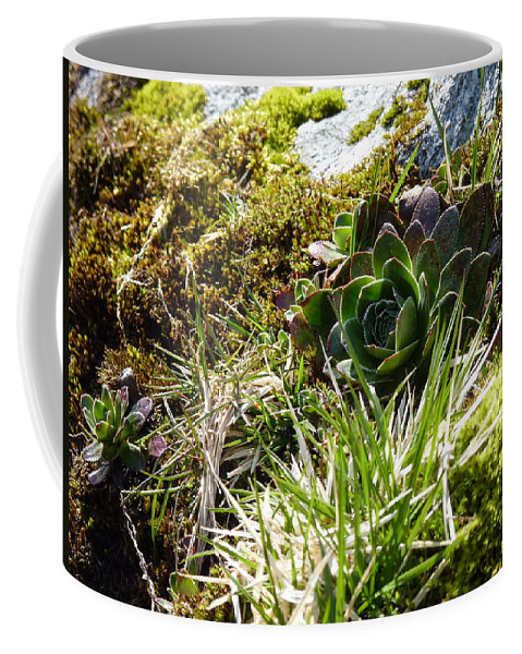 Coffee Mug featuring the photograph Northern Rose by Katerina Naumenko