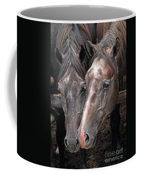 Horse Coffee Mug featuring the photograph Nose To Nose by Angel Ciesniarska