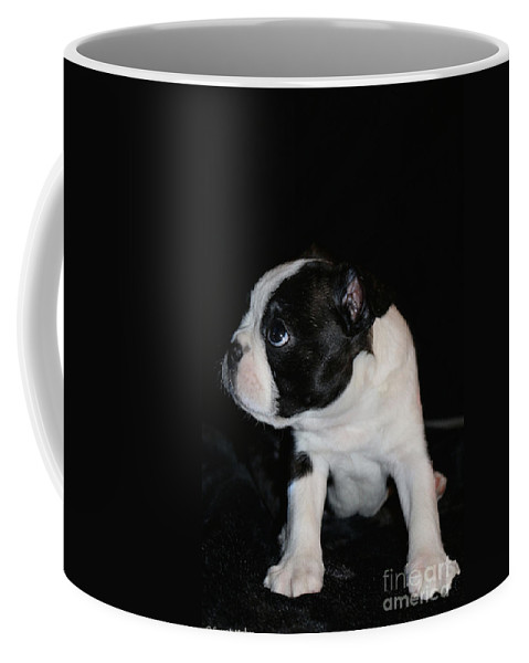 Animal Coffee Mug featuring the photograph Not Guilty by Susan Herber