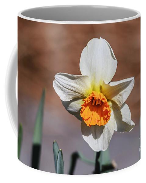 Seasons Coffee Mug featuring the photograph Nova by Elvis Vaughn