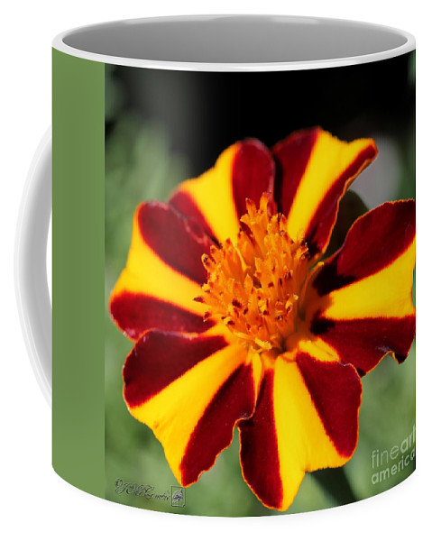Mccombie Coffee Mug featuring the photograph Novelty French Marigold Named Mr. Majestic by J McCombie