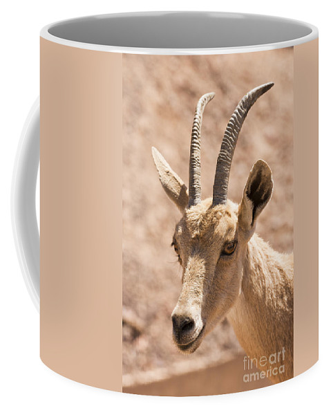 Ibex Coffee Mug featuring the photograph Nubian Ibex Capra Ibex Nubiana 1 by Eyal Bartov