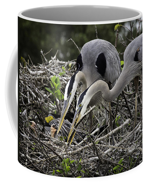 Florida Coffee Mug featuring the photograph Nurturing by Fran Gallogly