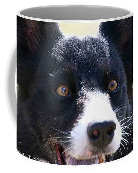 Dog Coffee Mug featuring the photograph O Happy Day by Susan Herber