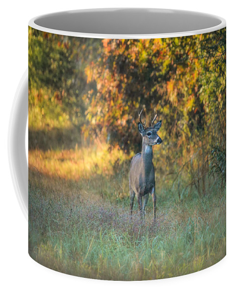 Animal Coffee Mug featuring the photograph October Buck by Jai Johnson