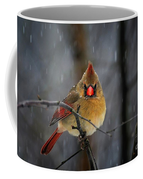Cardinal Coffee Mug featuring the photograph Oh No Not Again by Lois Bryan