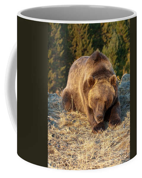 Grizzly Bear Coffee Mug featuring the photograph Ok - It's Your Trail by Sandra Bronstein