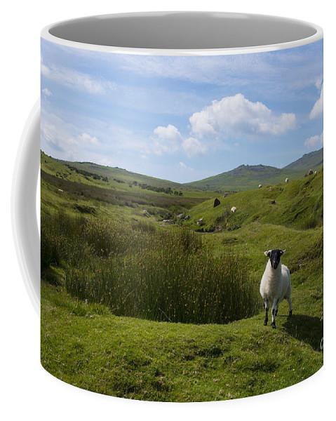 Dartmoor Coffee Mug featuring the photograph Okehampton Sheep by Rob Hawkins