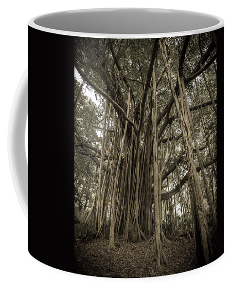 3scape Photos Coffee Mug featuring the photograph Old Banyan Tree by Adam Romanowicz