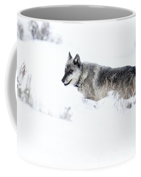 Gray Wolf Coffee Mug featuring the photograph Ole Blue Eyes by Deby Dixon