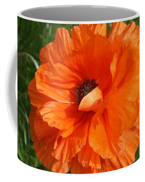 Poppy Coffee Mug featuring the photograph Olympia Orange Poppy by Christiane Schulze Art And Photography