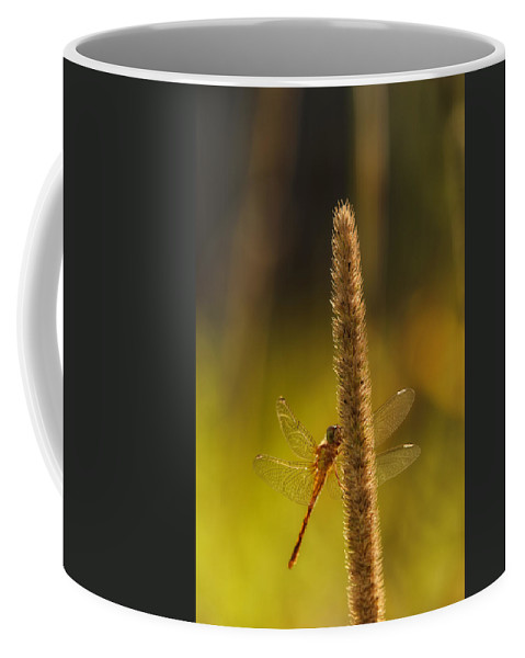 Dragonfly Coffee Mug featuring the photograph On A Summer Morning by Susan Capuano
