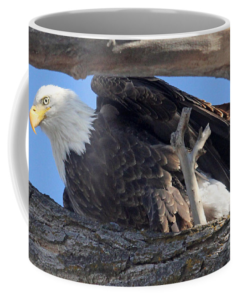 Colorado Coffee Mug featuring the photograph On Guard by Bob Hislop