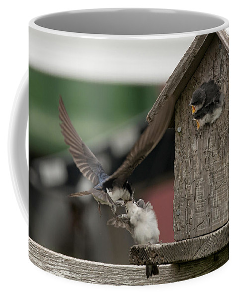Swallow Coffee Mug featuring the photograph On Target by Betty Depee