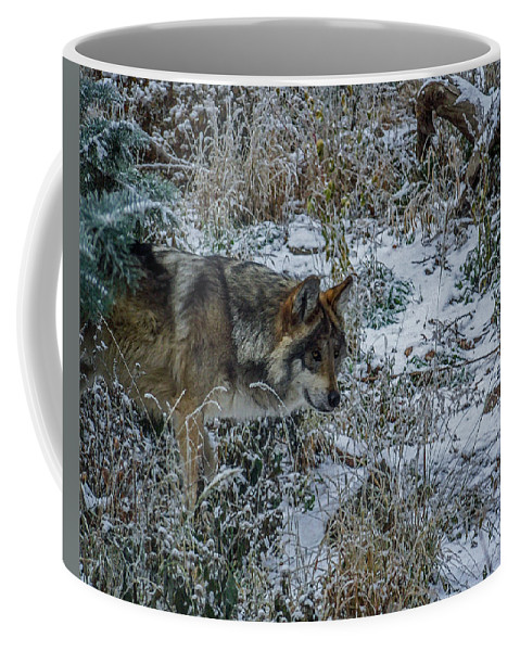 Wolf Coffee Mug featuring the photograph On The Move by Ernie Echols