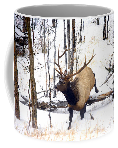 Elk Coffee Mug featuring the photograph On the Move by Mike Dawson