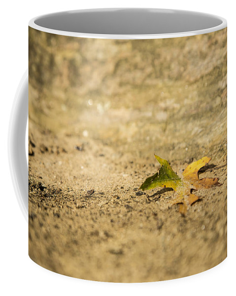 Leaf Coffee Mug featuring the photograph One Fallen by Karol Livote