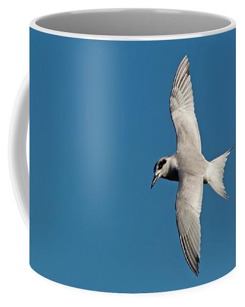 Wildlife Coffee Mug featuring the photograph One Good Tern by Kenneth Albin