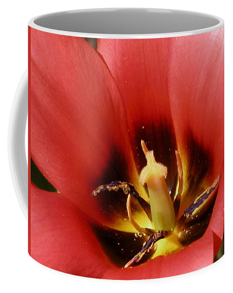 Flower Coffee Mug featuring the photograph Open To Show by Karol Livote