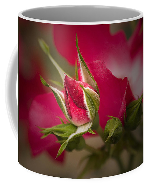 Brookside Gardens Coffee Mug featuring the photograph Opening Act by Sharon M Connolly