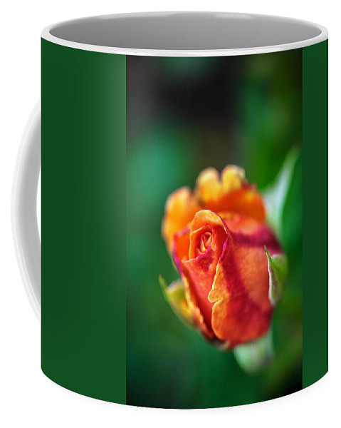 Bumble Bee Coffee Mug featuring the photograph Orange And Fuschia Rosebud by Sennie Pierson