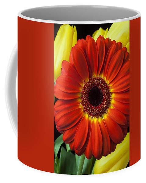 Orange Mum Coffee Mug featuring the photograph Orange Gerbera by Garry Gay