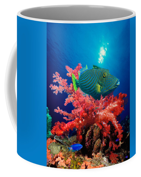 Photography Coffee Mug featuring the photograph Orange-lined Triggerfish Balistapus by Panoramic Images
