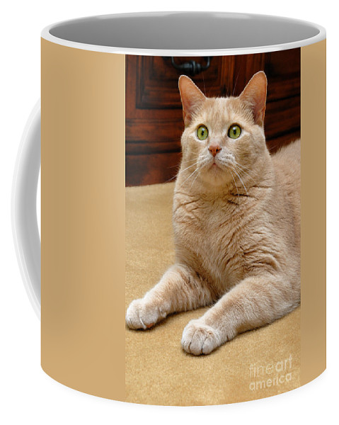 Cat Coffee Mug featuring the photograph Orange Tabby Cat by Amy Cicconi