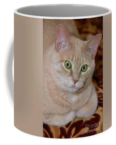 Animal Ears Coffee Mug featuring the photograph Orange Tabby Cat Poses Royally by Amy Cicconi