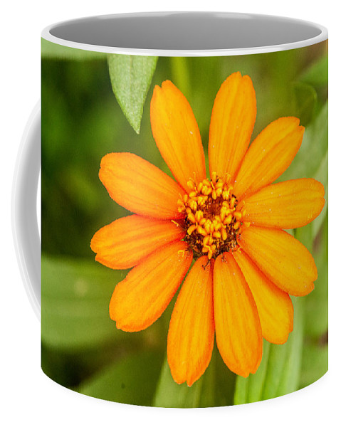 Zennia Coffee Mug featuring the photograph Orange Zenia by Douglas Barnett