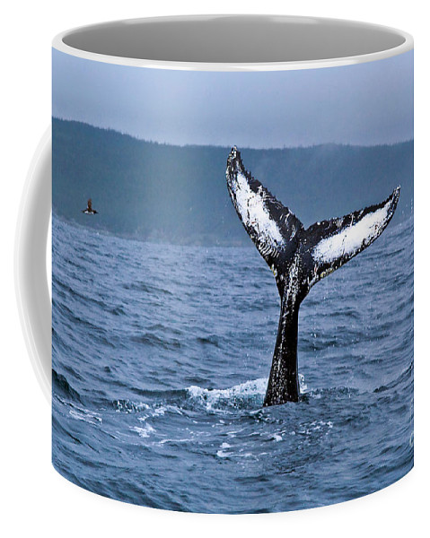 Humpback Whale Coffee Mug featuring the photograph Orca Bitemarks On Humpback Tail by Liz Leyden