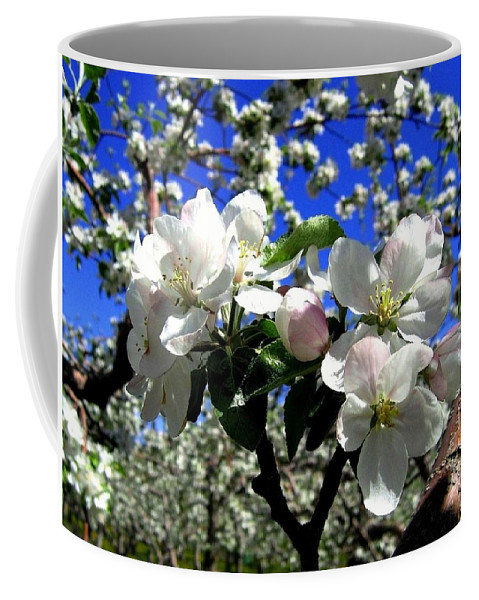 Apple Blossoms Coffee Mug featuring the photograph Orchard Ovation by Will Borden