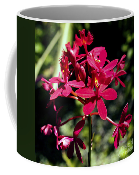 Fine Art Photography Coffee Mug featuring the photograph Orchid Study V by Patricia Griffin Brett