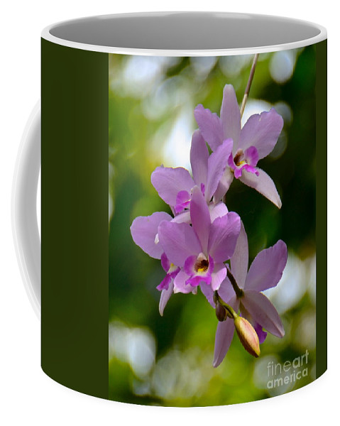 Orchid Coffee Mug featuring the photograph Orchids For You by Carol Bradley