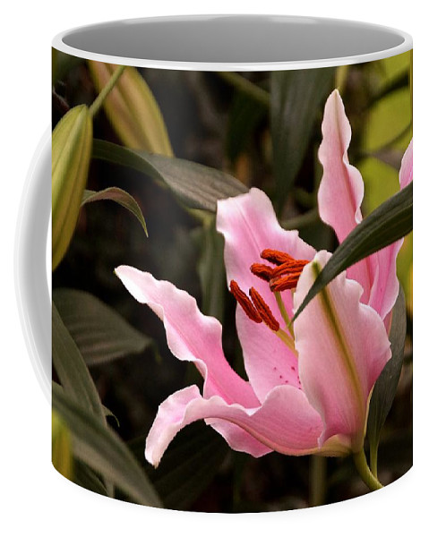 Large Pink Blossoms Coffee Mug featuring the photograph Oriental Lily Beauty by Byron Varvarigos