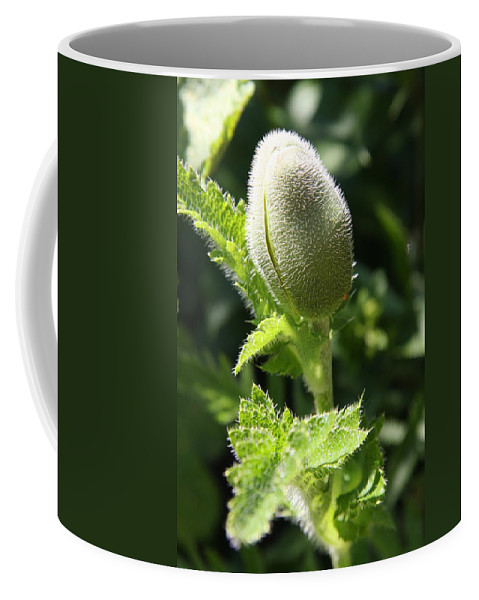 Poppy Coffee Mug featuring the photograph Oriental Poppybud by Christiane Schulze Art And Photography