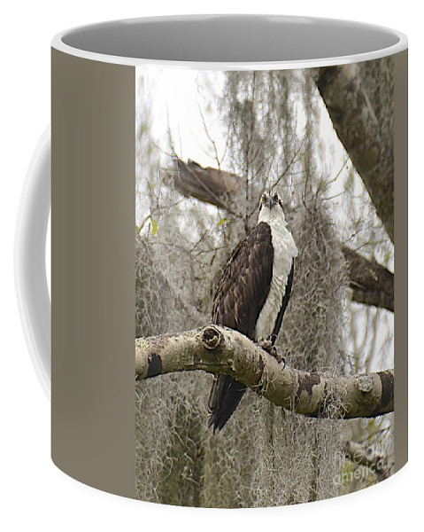 Osprey Coffee Mug featuring the photograph Osprey by Carol Bradley
