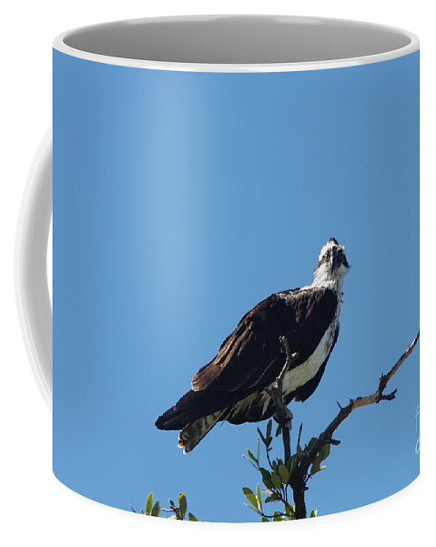 Osprey Coffee Mug featuring the photograph Osprey In A Tree by Christiane Schulze Art And Photography