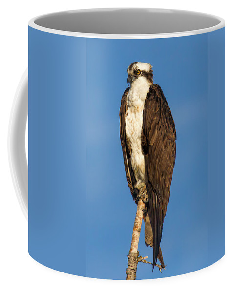 Osprey Coffee Mug featuring the photograph Osprey Perched In Yellowstone National Park by Martin Belan