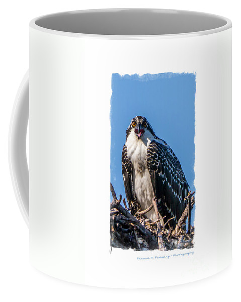 Funny Coffee Mug featuring the photograph Osprey Surprise Party Card by Edward Fielding