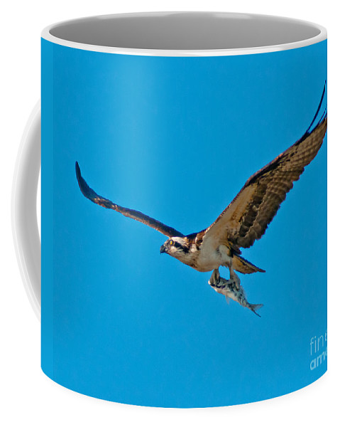 Osprey Coffee Mug featuring the photograph Dinner To Go by Stephen Whalen