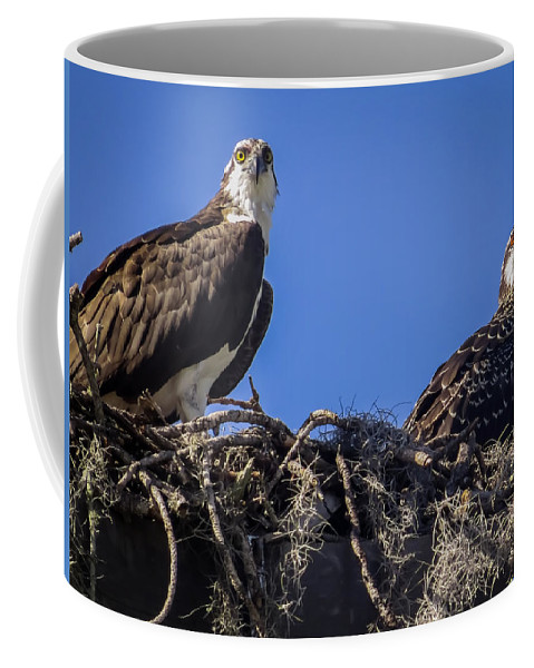 Sea Hawk Coffee Mug featuring the photograph Ospreys In The Nest by Zina Stromberg