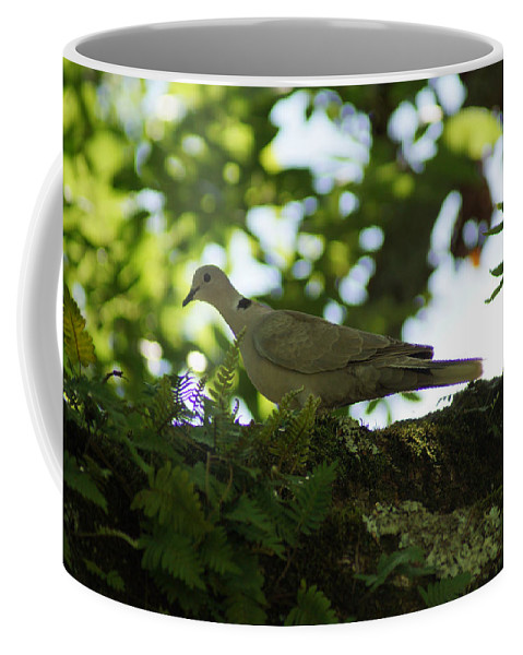 Collared Dove Coffee Mug featuring the photograph Out My Back Door by Kim Pate