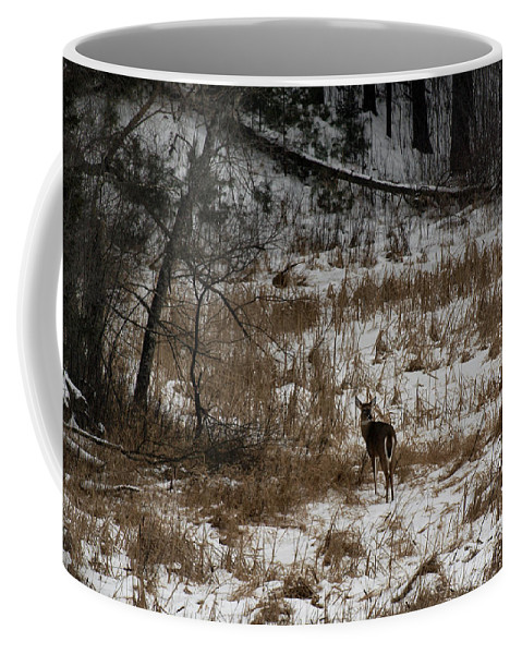 White Tailed Deer Coffee Mug featuring the photograph Out Of The Tangle by Thomas Young