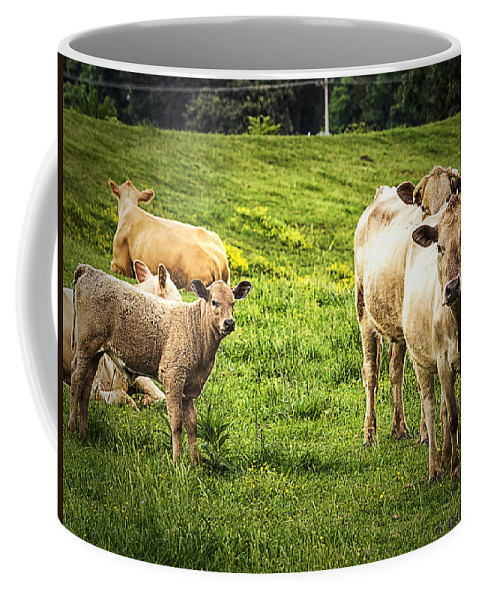 Landscape Coffee Mug featuring the photograph Out To Pasture by Barry Jones