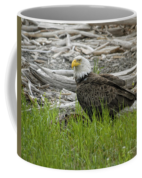 Eagles Coffee Mug featuring the photograph Outdoor Dining by Claudia Kuhn